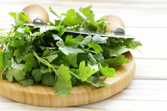 Fresh fragrant green parsley Stock Image