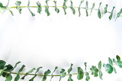 Border of fragrant eucalyptus branches. Fresh and fragrant green stems of eucalyptus border the top and bottom of a white background with copy space royalty free stock photos