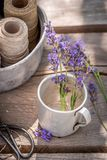 Fresh and fragrant lavender ready to dry in summer. On wooden table stock image