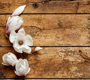 Fresh fragrant spring magnolias Royalty Free Stock Photography