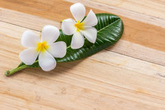 Fresh frangipani flower on wooden table Royalty Free Stock Photos