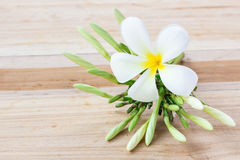 Fresh frangipani flower on wooden table Royalty Free Stock Images