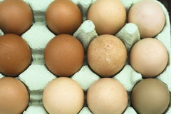 Fresh free-range chicken eggs Royalty Free Stock Images