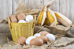 Fresh free range eggs Stock Image