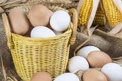 Fresh free range eggs Stock Images