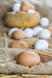 Fresh free range eggs Stock Photography