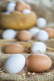Fresh free range eggs Royalty Free Stock Image