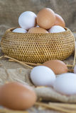 Fresh free range eggs Royalty Free Stock Photography