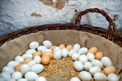 Fresh free range farm eggs Stock Image
