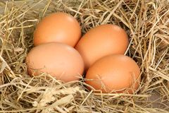 Fresh freerange eggs Royalty Free Stock Photo