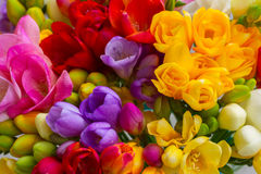 Fresh freesia flowers Royalty Free Stock Image