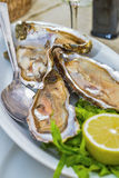Fresh French appetizer oysters on ice with lemon, for gourmets Stock Photography