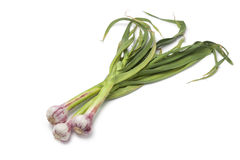 Fresh French garlic. On white background Stock Photos