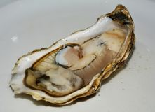 Fresh French oyster in brown hues royalty free stock photo