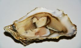 Fresh French oyster stock photography