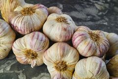 Fresh french violet and rose garlic from Provence, France Royalty Free Stock Images
