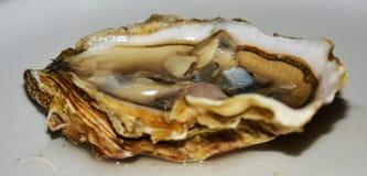Fresh fresh oyster. Background. Close up. Royalty Free Stock Photo
