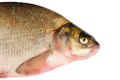 Fresh freshwater fish Bream. Royalty Free Stock Photography