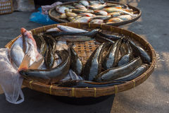 Fresh freshwater fish at the market Stock Photo