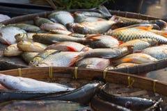 Fresh freshwater fish at the market Stock Photos