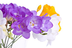 Fresh fresia flowers Stock Images