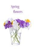 Fresh fresia flowers Royalty Free Stock Images