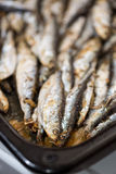 Fresh Fried Smelts Stock Photography