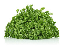 Fresh frizzy parsley Royalty Free Stock Photos