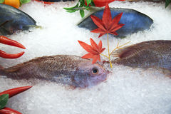Fresh frozen fish. Display in seafood restaurant Stock Images