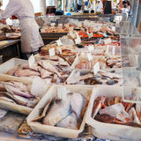 Fresh and Frozen Fish at Market, Bruges Stock Photos