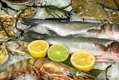 Fresh frozen fish with oysters, lobster and lemons Royalty Free Stock Photography