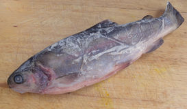 Fresh frozen fish trout river. Lies on a chopping board Stock Images