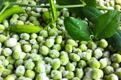 Fresh and frozen green peas Stock Photos