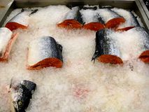Fresh frozen red fish trout and lox. Fish, liing in artificial ice royalty free stock photos