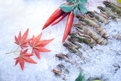Fresh Frozen Shrimp. Display at a restaurant Royalty Free Stock Images