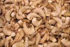 Fresh frozen shrimp Royalty Free Stock Images