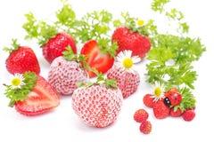 Fresh and frozen strawberries on white stock photos