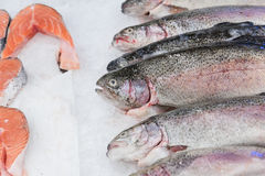 Fresh frozen trout Royalty Free Stock Image