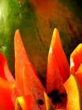 Fresh Fruit royalty free stock photo