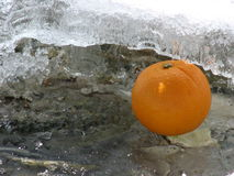 Fresh fruit. Orange in ice stock photography