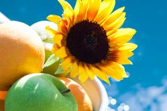 Fresh Fruit in Bowl with Sunflower Stock Image