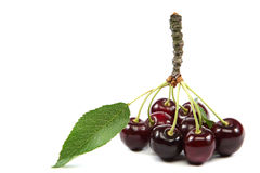 Fresh fruit cherries on white background. Royalty Free Stock Photos