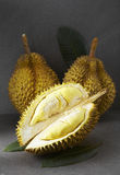 Fresh fruit,Durian from Thailand. Shot in studio Royalty Free Stock Photo