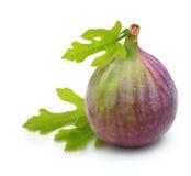 Fresh fruit figs isolated Royalty Free Stock Image