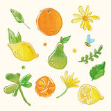 Fresh fruit and floral drawing graphic Stock Photos