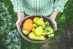 Fresh fruit in hands Stock Image