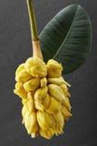 Fresh fruit,Jackfruit. Shot in studio Royalty Free Stock Photos