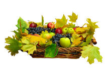 Fresh fruit and leaves in basket isolated on white Stock Photos