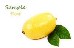 Fresh fruit. Lemon, isolated on a white background Royalty Free Stock Image
