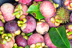 Fresh fruit mangosteen Royalty Free Stock Photography